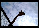 Lazy 5 Ranch - Giraffe