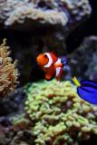 Nemo!
