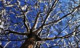 tree too