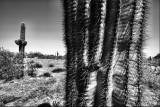 cactus close