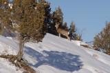 24-DEC-2009 - Rudolph?