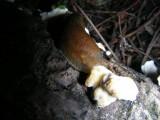 Arion sp Trillium Woods Kanata 02September2007 035 2.jpg