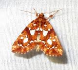 Callopistria cordata - 9633 - Silver-Spotted Fern Moth