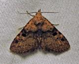 Metalectra quadrisignata - 8500 - Four-spotted Fungus moth
