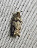 moth-21-06-2010-107.jpg