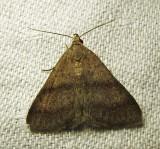 moth-21-06-2010-101.jpg