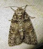 moth-29-06-2010-108.jpg