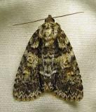 moth-29-06-2010-112.jpg