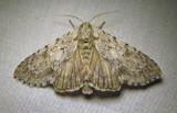 moth-07-07-2010-201.jpg