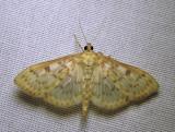 moth-07-07-2010-206.jpg