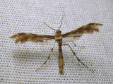 moth-08-07-2010-302.jpg