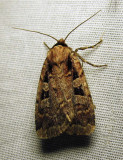 moth-08-07-2010-225.jpg