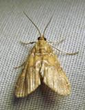 moth-07-07-2010-2.jpg