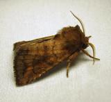 moth-12-07-2010-1000.jpg