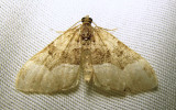 moth-16-07-2010-3001.jpg