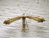 moth-12-07-2010-7.jpg