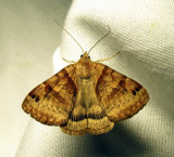 moth-24-07-2010-1111.jpg