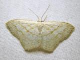 moth-24-07-2010-1115.jpg