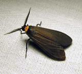 moth-24-07-2010-1116.jpg