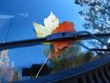 SC-leaves.jpg