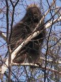 porcupine - view 1