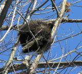 porcupine-1-large.jpg