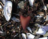 Heart-of-Gaspesie (Ste-Flavie)