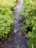 French Fort Cove stream