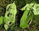 caterpillar-playtime-large.jpg