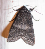 moth-23-05-08-1003.jpg