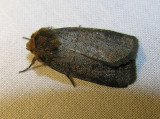 moth-29-05-2008-4.jpg