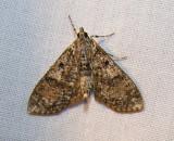 moth-29-05-2008-5.jpg