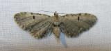 moth-04-06-2008-1.jpg