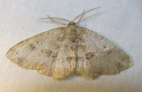 moth-04-06-2008-8.jpg