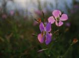 Waterside Wildflowers-3