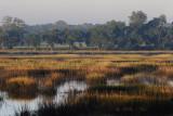 Morning-on-Marsh