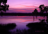 Low Country Evening