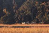 Autumn Marsh Grass