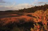 Autumn Marsh at Sunset