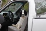 Truckin'  Dog