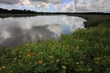 May along the Creek