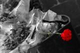 La Flor que nunca Llegó