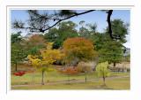 Nara Park 3