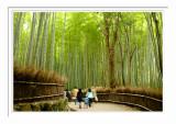 Bamboo Path - Arashiyama 2