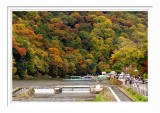 Fall Colors - Arashiyama