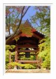 Kinkakuji Temple 5
