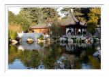 Chinese Garden Pond 3