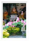 Arhats Garden 1