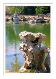 Pond @ Chinese Garden