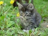 The odd kitten, he's unafraid of humans.